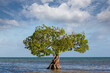 canvas print picture Mangroves