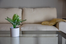 A Small House Plant On A Glass Table In A Modern Living Room