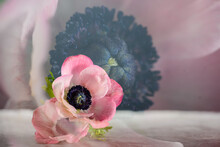 Art Installation Two Pink Anemone Flowers On A Gray Background Macro
