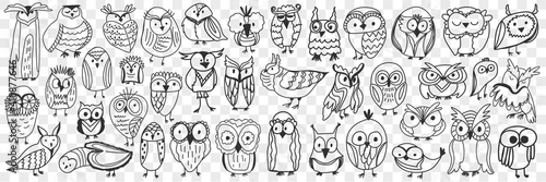 Fototapeta Various owls birds doodle set. Collection of hand drawn cute owls night birds of various shapes and sizes showing faces isolated on transparent background. Illustration of bird type for kids obraz
