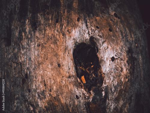 Madera de árbol viejo caído Fototapeta