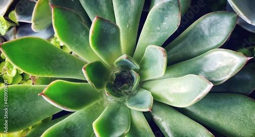 Full Frame Shot Of Succulent Plant Poster Mural XXL