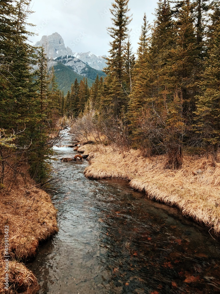 Fototapeta Scenic View Of River Stream Amidst Trees In Forest