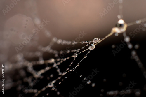 Fototapeta Natural background made of wet spiderweb with thin threads and waterdops on it