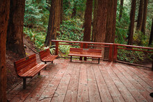 Redwoods Viewing Platform