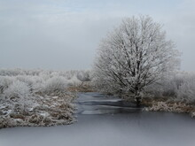 Winter Landscape. 50 Shades Of Blue, White And Grey.  Tree Along Waterside Frozen. Meditation. Stillness. Background.
