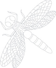Dragonfly Illustration Coloring Book