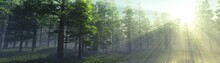 Beautiful Park In The Rays Of The Sun In The Morning In The Fog, Forest In The Haze, Sunlight Among The Trees, Trees In The Sunlight