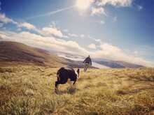 Rear View Of Woman Walking With Dog On Grassy Landscape Against Sky