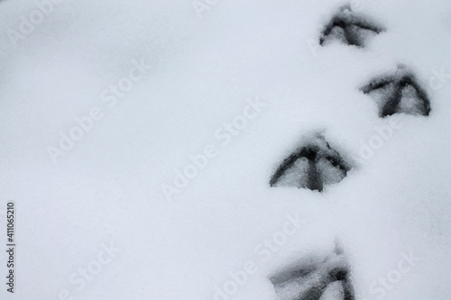 Photo Close-up Of Snow Covered Field With Bird Footprint