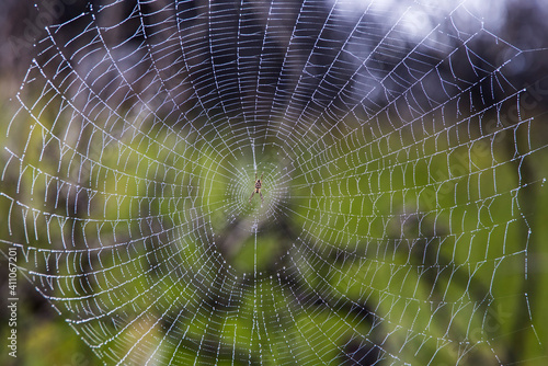 Fotografija Dew covered spider web and spider