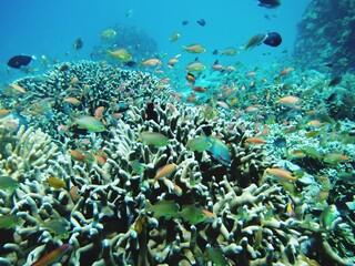 Fototapeta na wymiar View Of Fish Swimming In Sea