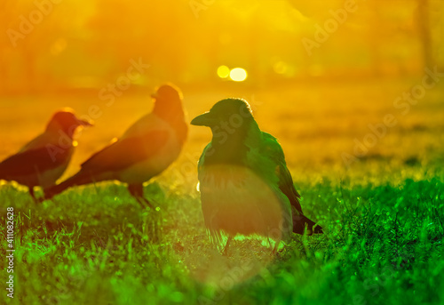 Canvas Print View Of A Crows On Field