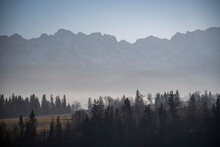 Tatra Mountains In Silhouette. Fog Is Covering The Lower Parts Of The Hills. The Highest Peaks Of Polish Tatras. Selective Focus On The Trees, Blurred Background.