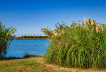 Reeds Next To The Canal Water In The Nature Park Of Strunjan