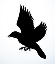 Bird In Flight. Vector Drawing