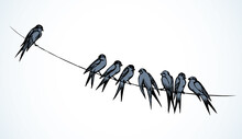 Swallows Are Sitting On A Wire. Vector Drawing