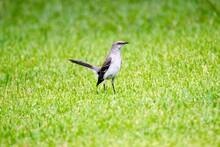 Bird Landing In A Field