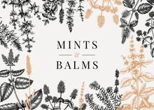 Hand Sketched  Mints Banner. Mints Plants Design. Vintage Herbs, Leaves, Flowers Hand Drawings Background.