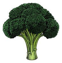 Broccoli Vegetable Illustration In A Vintage Retro Woodcut Etching Style.
