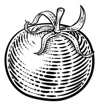 Tomato Vegetable Illustration In A Vintage Retro Woodcut Etching Style.
