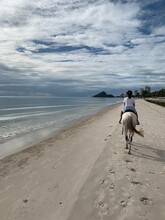 Rear View Of Girl Riding Horse At Beach
