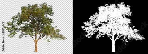 Fototapeta tree on transparent background image with clipping path