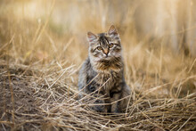 Sad Homeless Cat Sitting Dry Grass. Adorable Kitty Sitting Outdoor. Homeless Animals. Concept Help Homeless Cats
