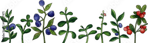 Fotografia Watercolor horizontal pattern with crowberry and blueberry