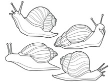 Snails. Set Of Hand Drawn Vector Illustrations. Elements For Coloring Page, Print, Card, Posters,