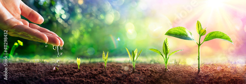 Growing Concept - Hand Watering Young Plants With Flare effect Wallpaper Mural