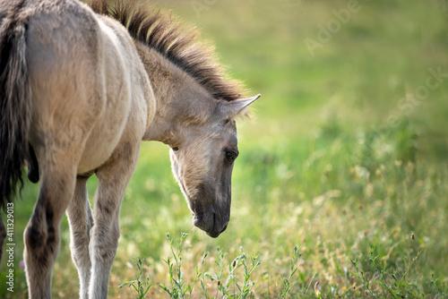 Foto wild horse foal