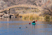 A Woman Paddles A Kayak In Calm Water, As American Coots, Fulica Americana, Swim In The Area.