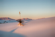 Adam's Needle In White Sands National Park
