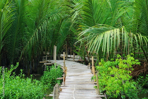 Photographie Boardwalk Amidst Bamboos In Forest