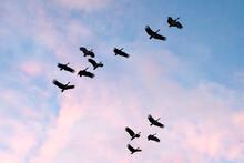 Flock Of Birds Flying At Sunset  Birds Silhouette