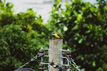 Brazilian Seabird Photographed In Its Natural Habitat In Guanabara Bay, Rio De Janeiro, Brazil.