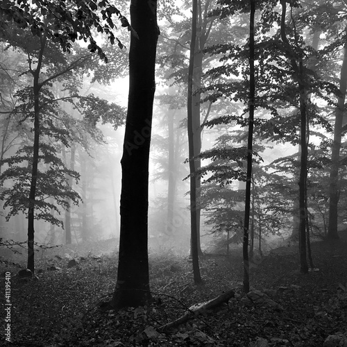 Canvas Print Trees In Forest