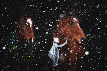 Two Brown Horses With Christmas Wreath With Decorations And Grey Scarf On Black Background In Heavy Snowfall.