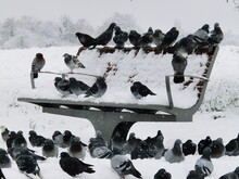 High Angle View Of Ducks On Snow Covered Field