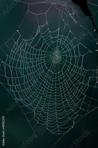 Fototapeta Spider web with morning dew