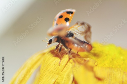 Photo Close-up Of Ladybug On Flower