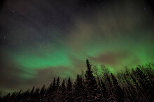 Northern Lights Over The Forest. Polar Light