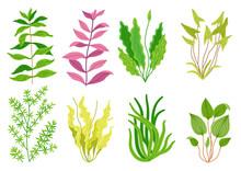 Cute Cartoon Aquarium Seaweeds Set. Flat Style Illustrations For Children. Collection Of Underwater Planting, Wildlife Nature