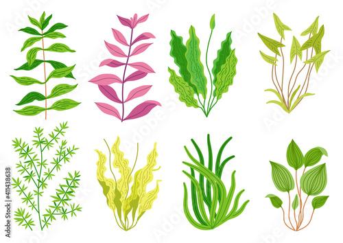 Fotografie, Obraz Cute cartoon aquarium seaweeds set