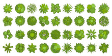 Trees Top View. Different Plants And Trees Vector Set For Architectural Or Landscape Design. (View From Above) Nature Green Spaces.