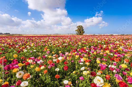 Valokuvatapetti Spring in Israel