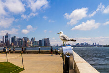 Ring-billed Gull (Larus Delawarensis) Standing On A Binocular By The Sea On Ellis Island With Tourists Watching At New York Cityscape In The Background