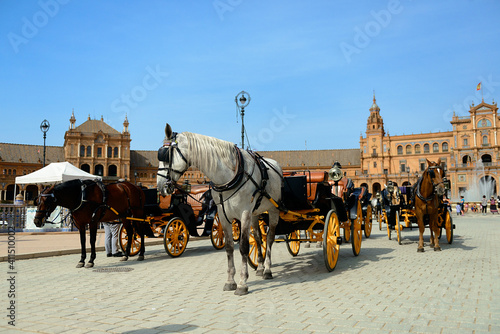 Fototapety, obrazy: horse and carriage