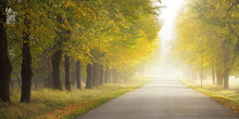Single Lane Rural Asphalt Road (alley) Through Deciduous Trees. Golden Sunlight, Sunbeams, Fog, Shadows. Fairy Autumn Scene. Hope, Heaven, Wilderness, Loneliness, Nature, Ecology, Walking, Cycling